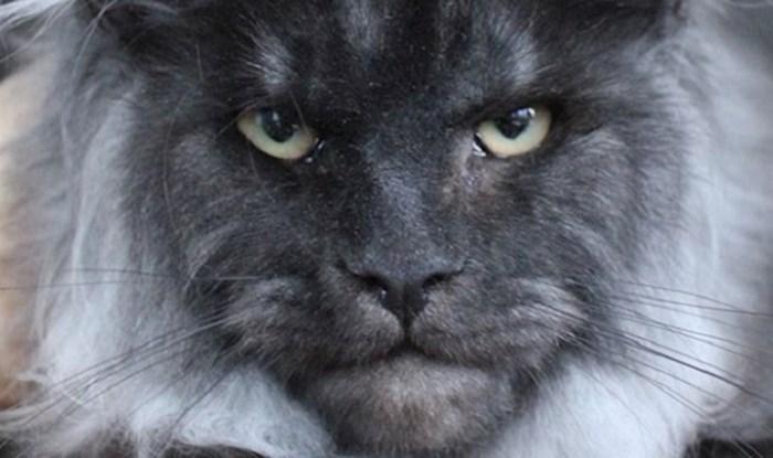 Upoznajte neobične mačke za koje kažu da nalikuju čovjeku