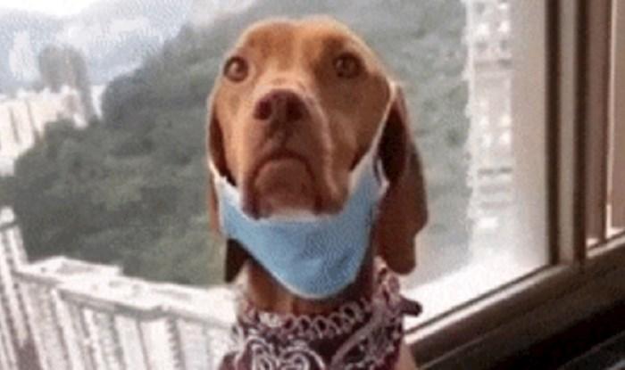 Ovog psa vlasnici su naučili staviti zaštitnu masku