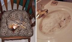 Ove mačke su prave nindže, pokušajte ih pronaći na slikama