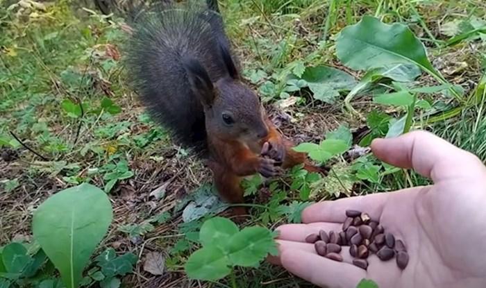 Snimio je kako hrani vjevericu, jedna stvar mu nije bila jasna