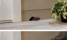 Kako pokvariti dan miševima i štakorima