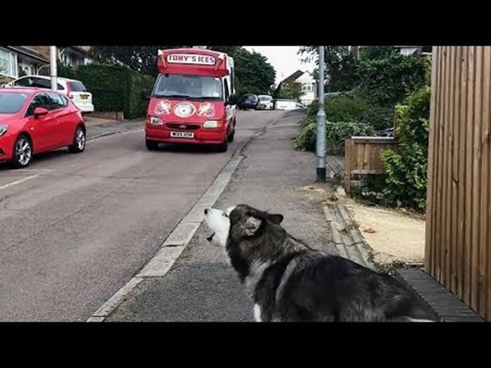 Ovaj pas svakog dana čeka na istom mjestu, a razlog će vam nabaciti osmijeh na lice