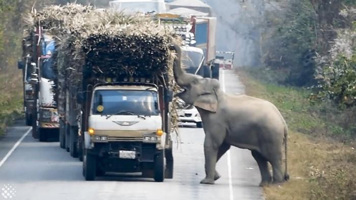 Slon je na cesti zaustavio kamione, sve im je bilo jasno kad su vidjeli što želi