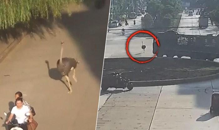 Vozači i pješaci bili su totalno izgubljeni kad su vidjeli ovog bjegunca, nadzorne kamere su sve snimile