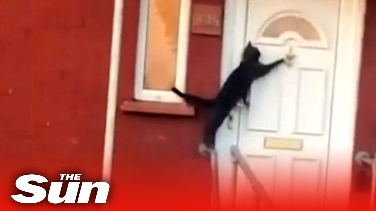 nevjerojatna maca kosa besplatno pron moives