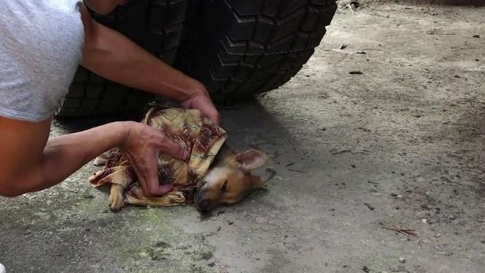 Bolesni psić je ležao ispod kamiona kao da je odustao od svega, a onda se stigao spas u posljednji tren