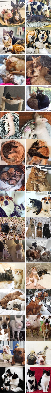 Slatke usporedbe starih i novih fotki životinja koje su zajedno odrasle