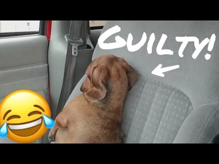 VIDEO Pas je znao da je gadno zaribao, vlasnik je snimio njegovu smiješnu reakciju
