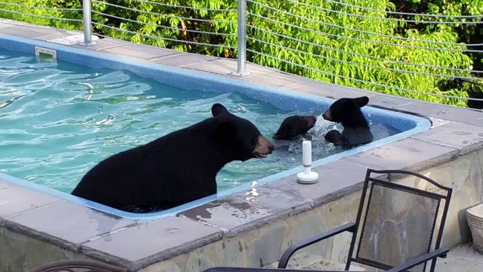 Zatekli su mamu medvjedicu i dva medvjedića kako se kupaju u njihovom bazenu