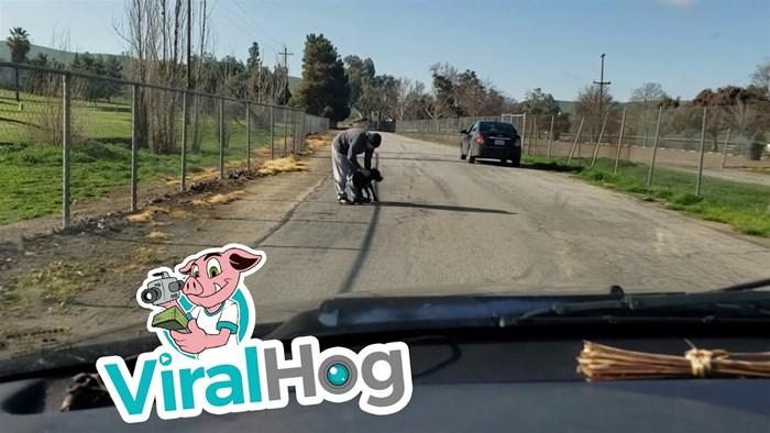 Besramno ostavio psa nasred ceste i otišao, a jadna životinja pokušavala ući auto