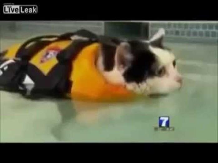 Voditeljica se nije mogla prestati smijati pretiloj mački koja pokušava skinuti kile