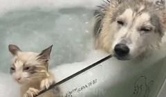 Preslatko. Pas, maca i uživancija u kupanju