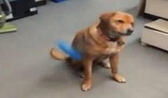 Ovaj pas izignorirao je vlasnika i potpuno ga osramotio